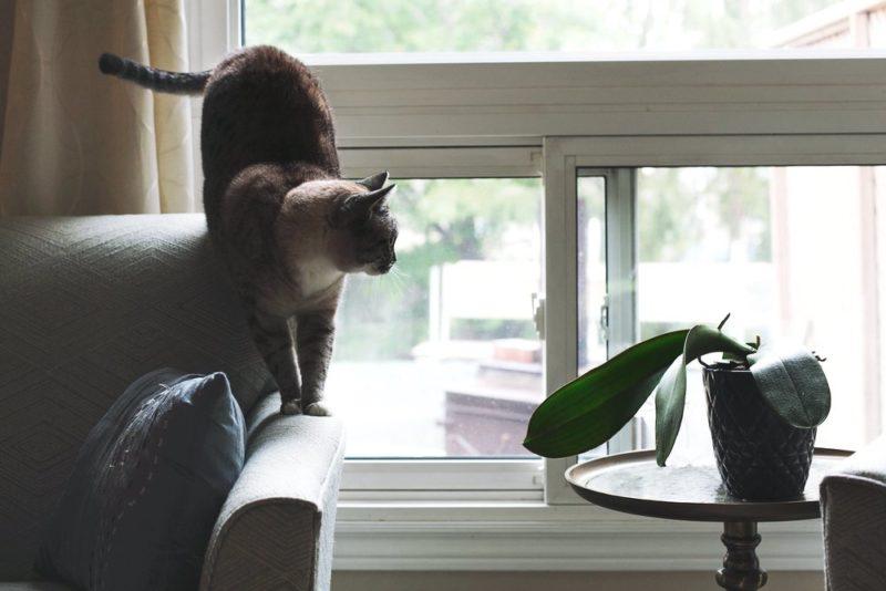 cat-sofa_best-diy-home-security-system.jpg