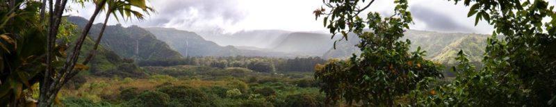 hawaii-forest_plastic-moving-bins.jpg