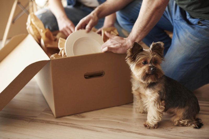 moving box dog - how to pack and move in a hurry